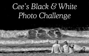 Monochrome Monday – Black and White Photography(35)
